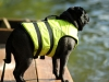 swimmingpug